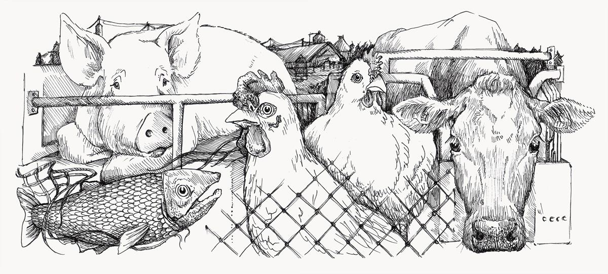 Illustration föreställande en fisk, en ko, en gris, en kyckling och en höna